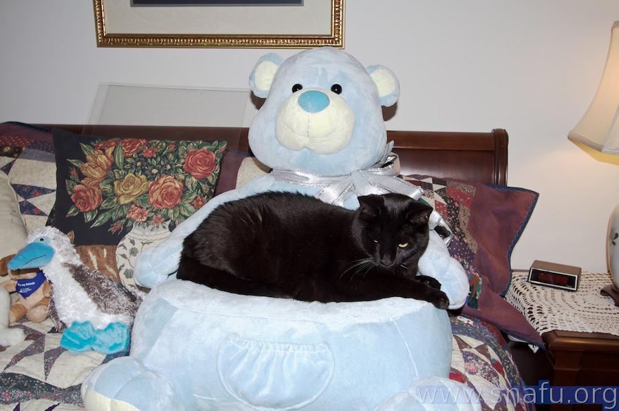 Comfort Kitty